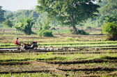 A boy working with a motor plow in a rice field — Stock Photo