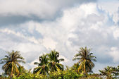 Tropical monsoon stormy sky with palm trees — Stock Photo