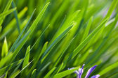 Fresh and green leaves (shallow DOF) — Stock Photo