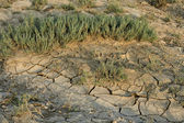 Dried cracked mud — Stock Photo