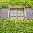 Window and wall full of plants — Stock Photo