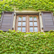 Royalty-Free Stock Photo: Window and wall full of plants