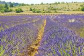 Södra frankrike, provence — Stockfoto