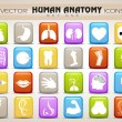 Human anatomy website icons set. EPS 10. - Stock Vector