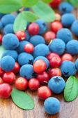 Fresh wild berries — Stock Photo