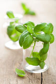 Basil in glass — Stock Photo