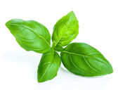 Basil isolated — Stock Photo