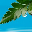 Water drops on fresh green leaf — Stock Photo #12352809