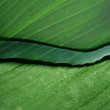 Green leaf texture with water drop on it — Stock Photo