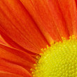 Close-up of an orange flower — Stock Photo