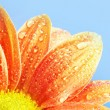 Stock Photo: Close-up of an orange flower