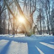 Winter landscape — Stock Photo #12352901