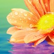 Stock Photo: Close-up of an orange flower reflected in rendered water