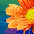 Close-up of an orange flower reflected in rendered water — Stock Photo
