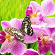 Beautiful butterfly sitting on an orchid flower — Stockfoto