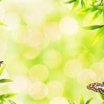 Ladybugs sitting on bamboo leaves — Stock Photo