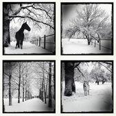 Monochrome picture of a winter set — Stock Photo