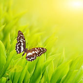Butterfly sitting on a fresh green grass — Stock Photo