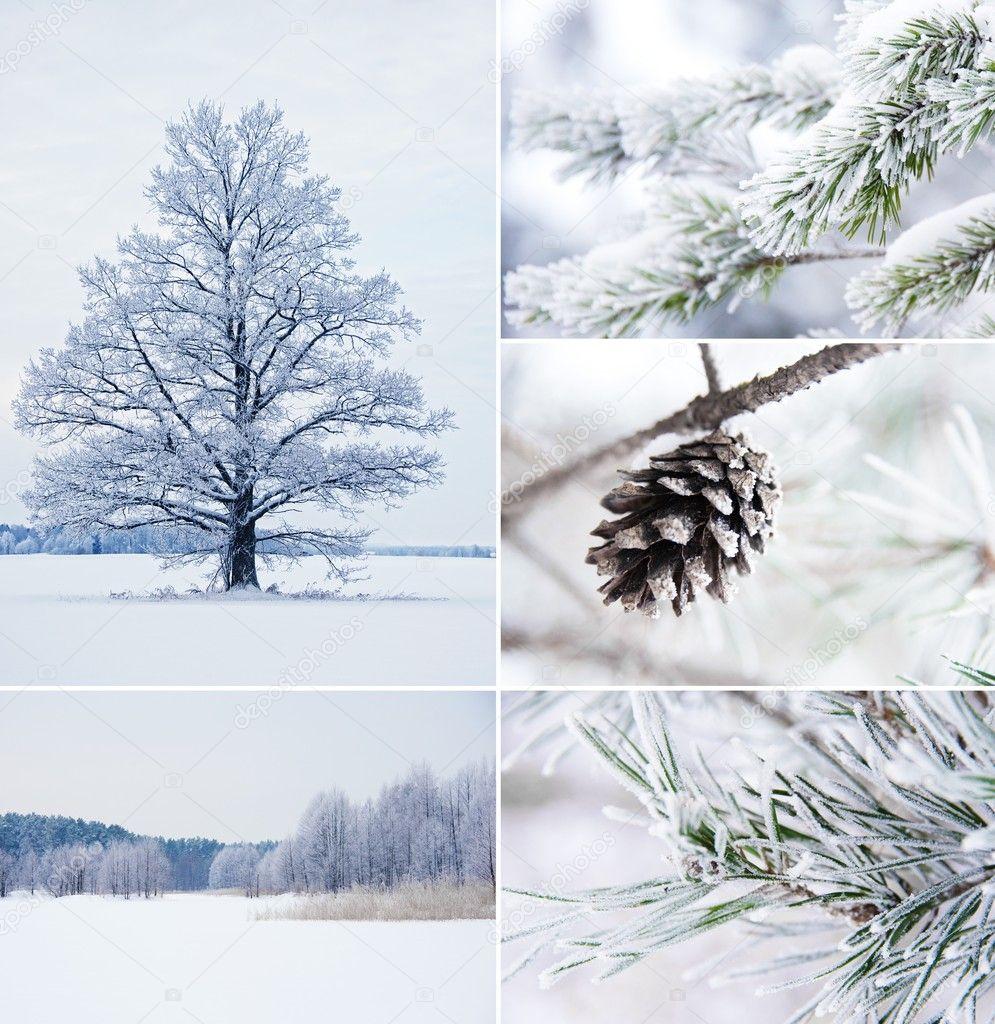 冬季拼贴画– 图库图片