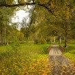 Road in a autumn park — Stock Photo
