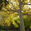 Old tree in a park — Stock Photo #12373401