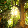 Old tree in a tropical forest — Stock Photo