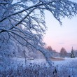 Beautiful winter landscape — Stockfoto