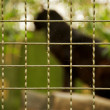 Animal in a zoo — Stock Photo #12373917