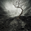 Dramatic sky over old lonely tree — Stock Photo