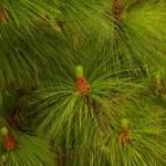 Close-up of a fir tree — Stock Photo #12373940