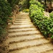 Path in a garden — Stock Photo