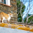 Cat on a roof — Stock Photo
