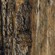Wooden background — Stock Photo #12374154