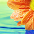 Orange flower reflected in water — Stock Photo