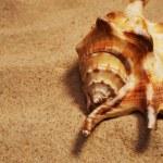 Seashell on a sand — Stock Photo #12374205