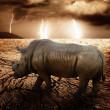 Rhino in a desert storm — Stock Photo