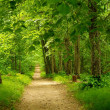 Beautiful path in forest — Stock Photo