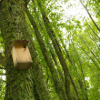 Starling-house on a tree in a forest - Stock Photo