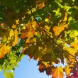 Autumnal leaves over blue sky - Stock Photo