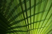 Palm leaf background — Stock Photo