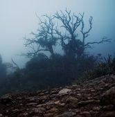 Vecchio albero spettrale del mattino — Foto Stock
