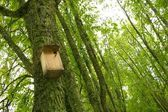 Starling-house on a tree in a forest — Stock Photo