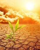 Green plant growing trough dead soil — Stock Photo