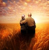 Senior couple standing in a wheat field at sunset — Stock Photo