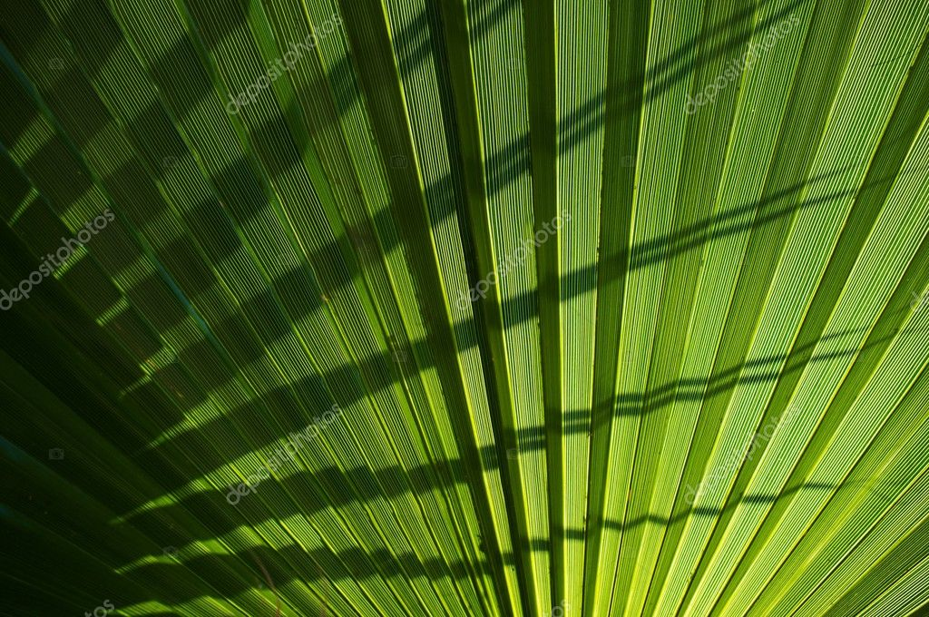 Palm leaf background.  Stock Photo #12373306