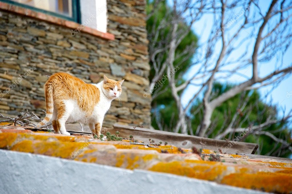 Cat on a roof. — Stock Photo #12374135