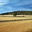 Rural landscape with wheat  fields and mountains. Sunset. Spain. — Stock Photo