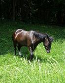 Koně odřeniny — Stock fotografie