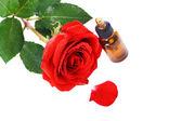 Бутылки эфирного масла и красная роза — Стоковое фото