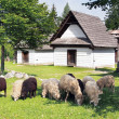 Sheep near folk houses — Stock Photo